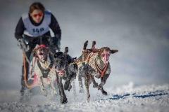1-Platz_Robert-Schatteiner-_Sport_Hundeschlittenrennen